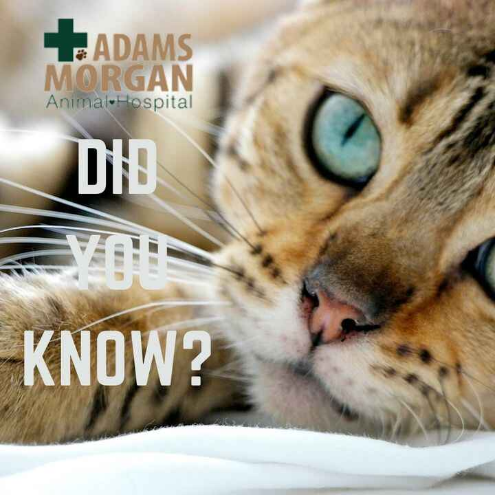 Did you know that cats are believed to be the only mammals who don't taste sweetness?  Or did you know that some cats ha...