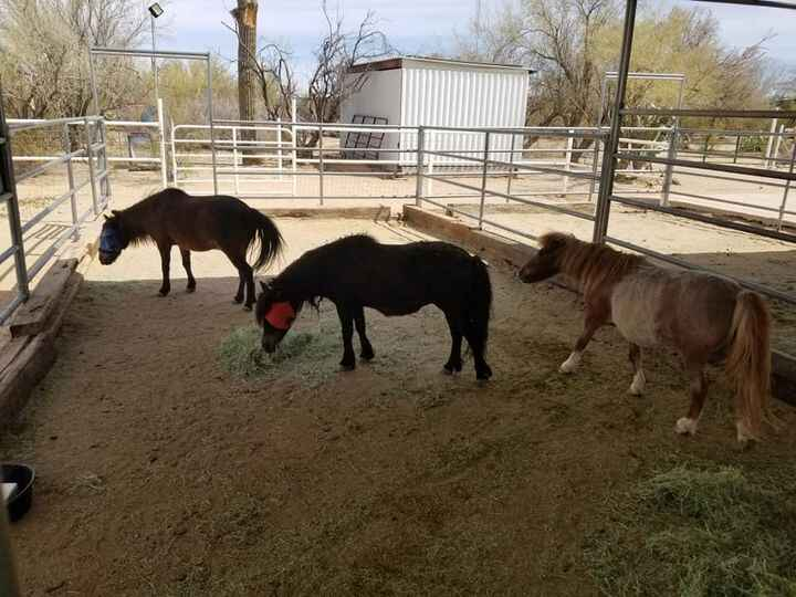 Settling into our new ranch in Marana Arizona! All the horses, dogs, and rabbits are here. The goats will come when I fi...
