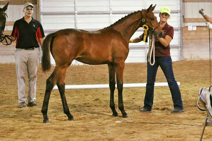 2019 filly by Furstenball out of EM Dahlcinae
