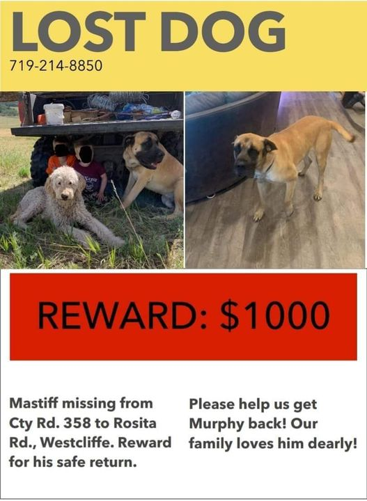 Please keep an eye out for him!!!!