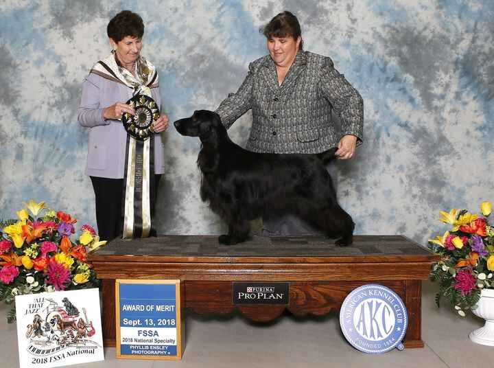 Finally getting a chance to load up my pictures from the Field Spaniel National.  We had a little lag in getting them fr...
