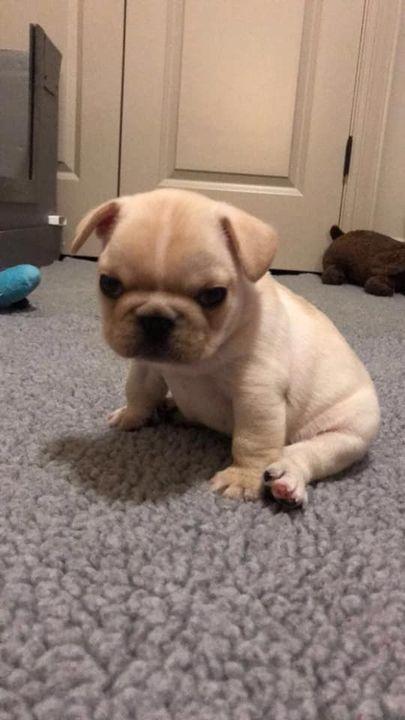 Momo has the cutest grouchy face 😍😍