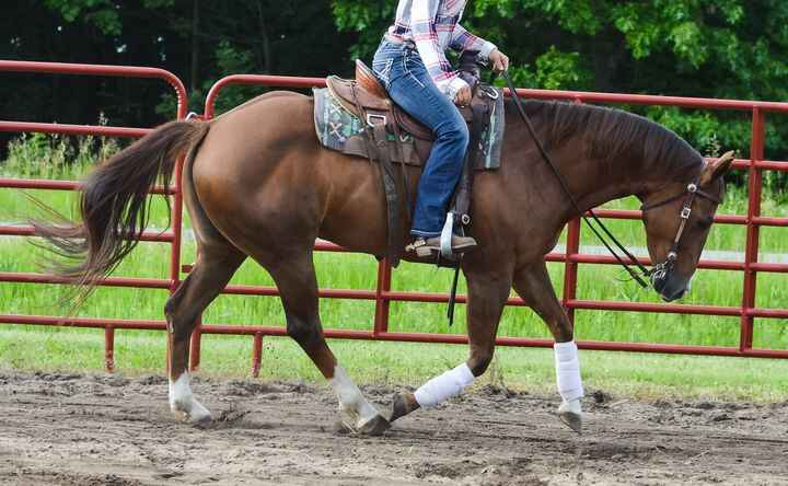 Gimmie A Red Jag (Lilly)5yr old APHA registered mare(Chicoutmyblingbling x Pea Shooter)Lilly is a well bread mare with a...