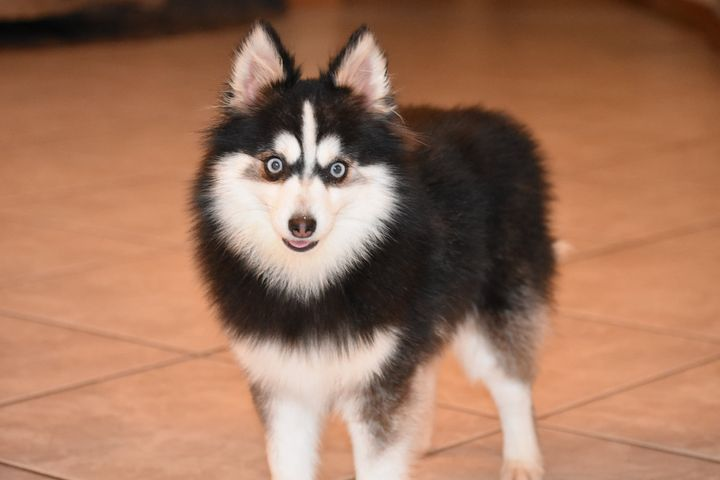 Meet Alexa! She is very sweet and loves to play. She is good with pups bigger and smaller than her. She would thrive bei...