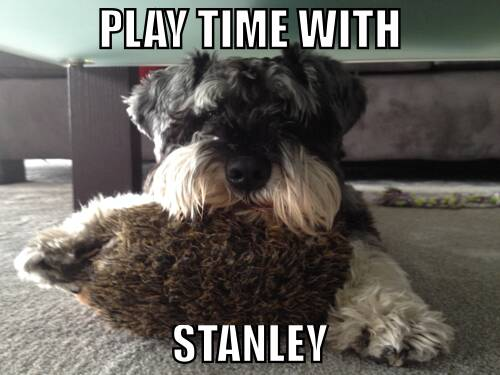 My new buddy Stanley and I are discussing which of us should have stuffed porcupine holding privileges. So far he has th...