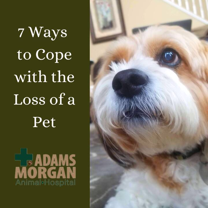 Losing our pets no matter what stage of their life (and for whatever reason) is never easy. Our friends at VetStreet hel...